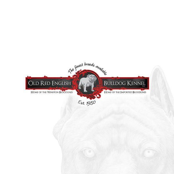 oldbulldogs